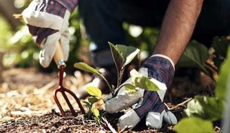 Vitalis service de jardinage en Alsace