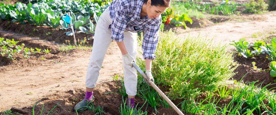 Les bons gestes du jardinier amateur