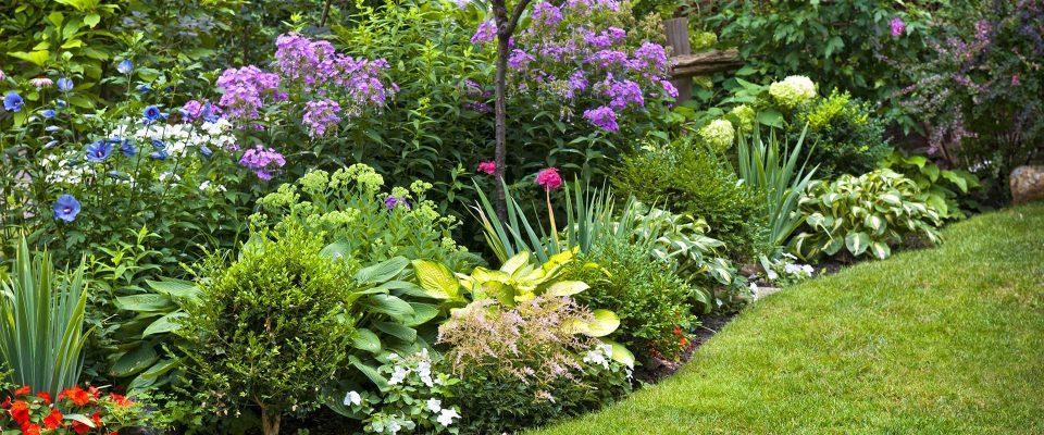 Sélection de fleurs pour l'été